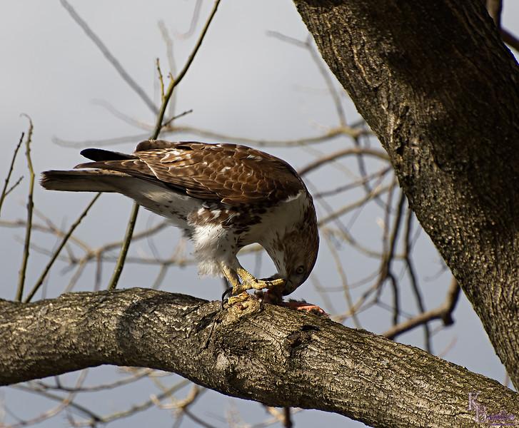 DSC_8775 the falcon_DxO