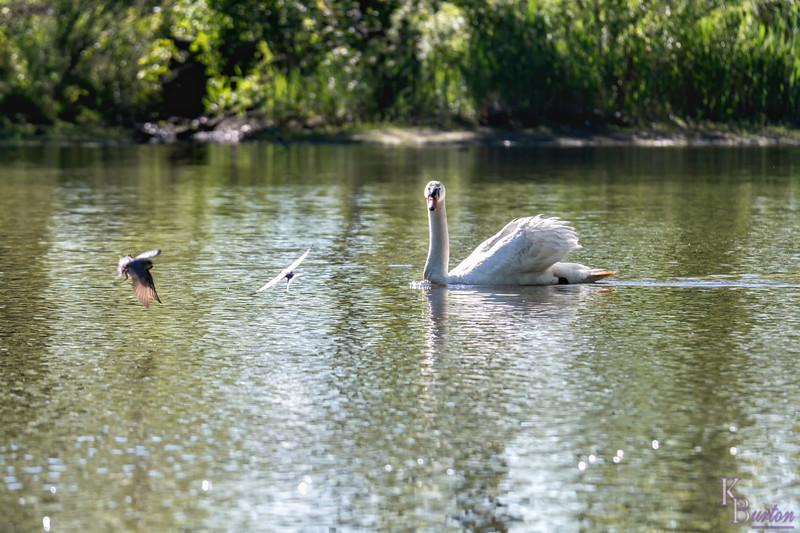 DSC_5626 scenes from Wolfe's pond