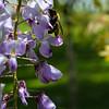 DSC_3288 springtime scenes at the botanical gardens