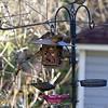 DSC_3523 backyard visitors_DxO