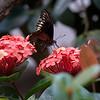 DSC_1100 scenes from Butterfly Gardens