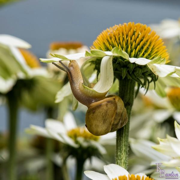 DSC_4534 a snails pace
