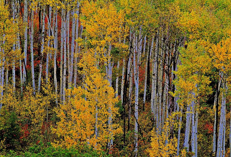 1520-autumn-Aspen_v1 copy