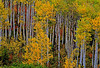 1520-autumn-Aspen_v1 copy