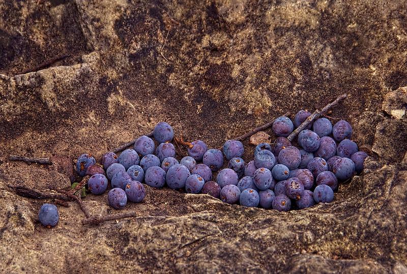 4141--Juniper-Berries-And-Limestone-_v2 copy