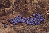 4141--Juniper-Berries-And-Limestone-_v2 copy