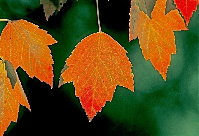1384 Autumn Jewels v1 copy