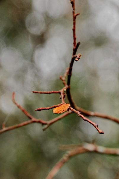 _2861-Autumns-End-_v1 copy