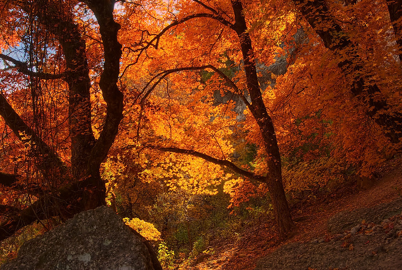 3508 Hillside-Ablaze-In-Autumn-Color- copy