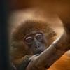 4509 Do-Monkeys-Ponder_v1