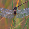 1179-Grounded-With-Dew-_v1_v1 copy
