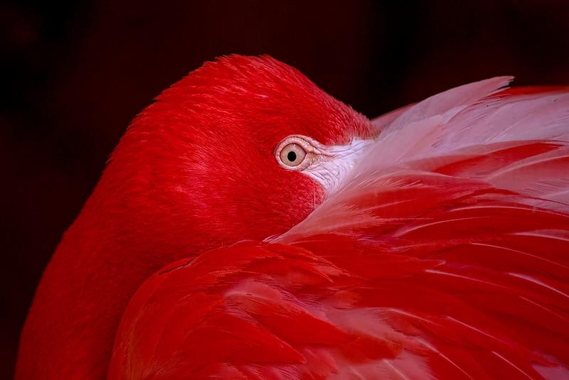 4491 Flamingo-Detail_v1