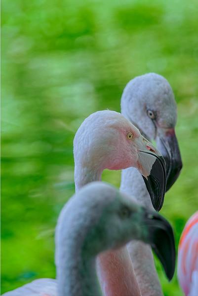 4492 Flamingo-Trio-_v1