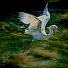 4493 Egret-On-The-Rise-_v1
