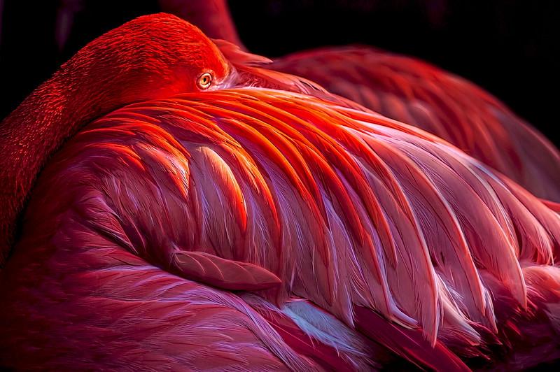 Illuminated-Flamingo-_v1 copy