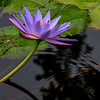 6781 Violet light_v1 copy
