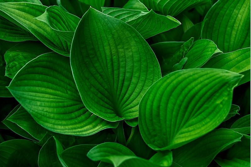 4393 Pallette-Of-Green_v1 copy