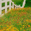 4168 Fenceline-And-Springtime-Color_v1 copy