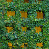 6432 Greening Wall _v1 copy 2