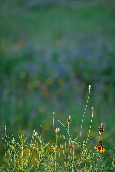 6361 Flowers And Light _v1 copy