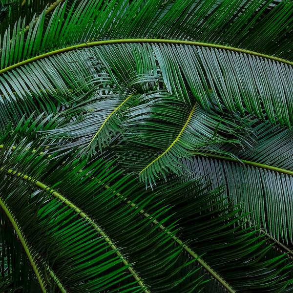 6791 Palm Leaves _v1 copy