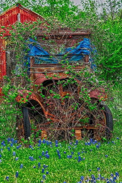 4263 Nature-Overtaking-A-Model-A-Ford-_v1 copy