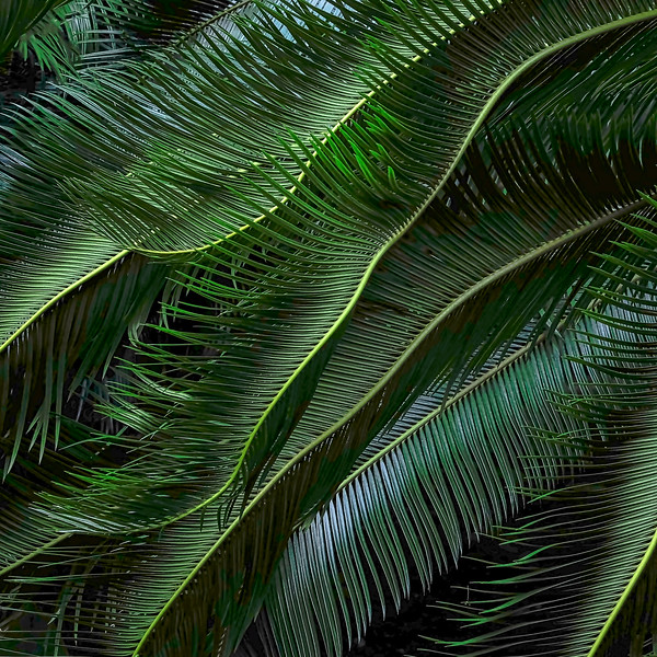 6792 Palm Leaves #2_v1 copy
