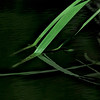 5261 Grasses-And-Reflection_v1 copy 2