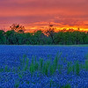 4344 Sunsetting-On-Bluebonnet-Fields_v1 copy