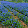 4938 Straight-And-Narrow-Bluebonnet-Road-_v1 copy