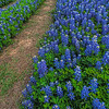4939 Bluebonnet-Roads-_v1 copy