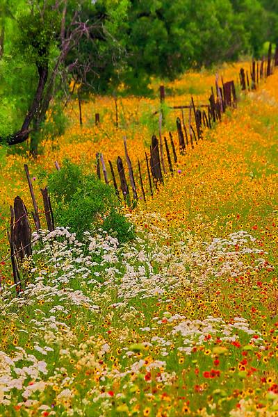 4993 Texas-Fenceline,Spring-Color-_v1 copy