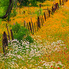 4993 Texas-Fenceline,Spring-Color-_v1 copy