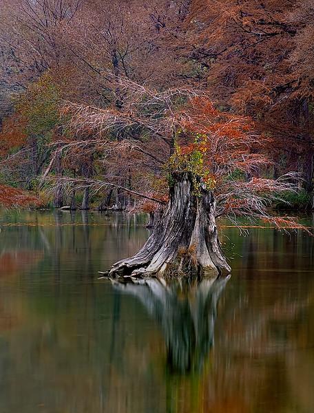 2354-Cyprus-Stump-In-Mid-Stream-_v2 copy