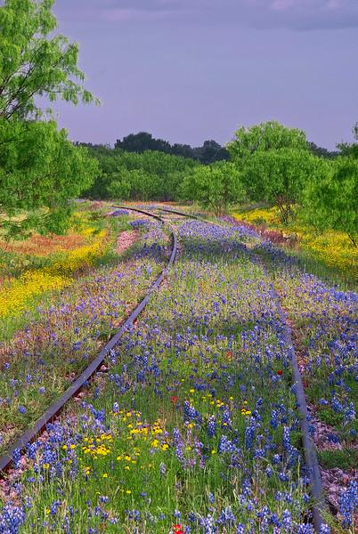 3108 Springtime-Along-The-Rail-Line_v1 copy