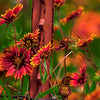 4951 Fencepost-And-Wildflowers-_v1_v1 copy