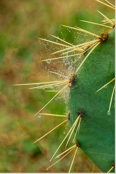 4170 Intricate-Web-And-Dew-On-Cactus_v1 copy