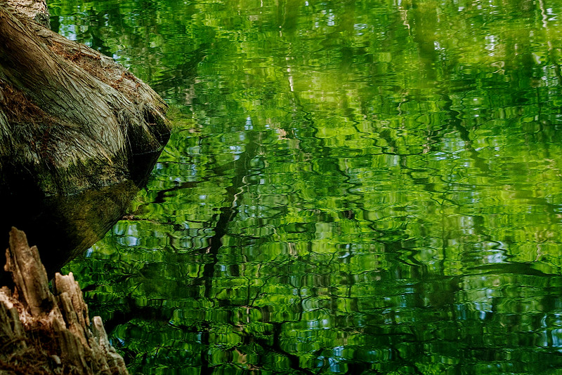 4390 Spring-Reflections-In-Cyprus-Creek-_v1