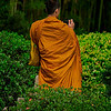 4385 A-Buddhist-Monk-Contemplates-A-Photograph_v1