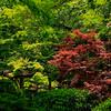 4416 Quiet-Scenic-gardenscape-_v1
