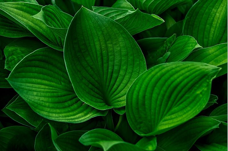 4393 Pallette-Of-Green_v1