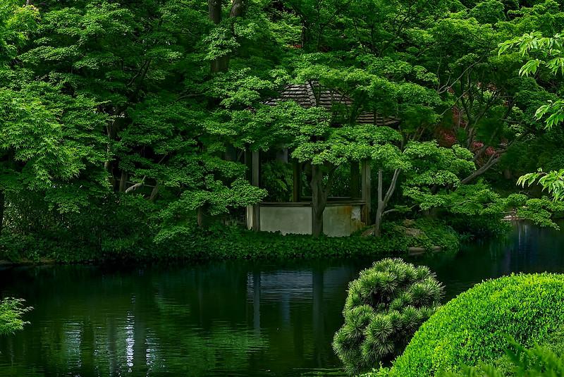 4481 gazebo-Peers-Through-The-Garden-Greenery-_v1