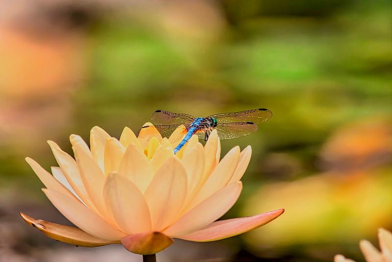 5183 Dragonfly-At-Rest_v1 copy