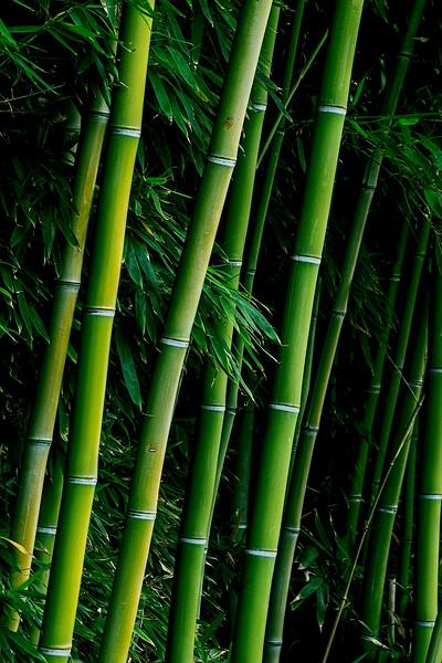 4381 Bamboo-Perfect_v1