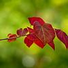 4427 Leaf-Detail_v1
