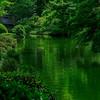 4383 Japanese-Garden-Landscape-_v1