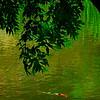 4464 Tranquility-_v1