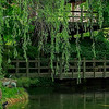 4399 Weeping-Willow-Kiss-A-tranquil-pond-_v1_v1