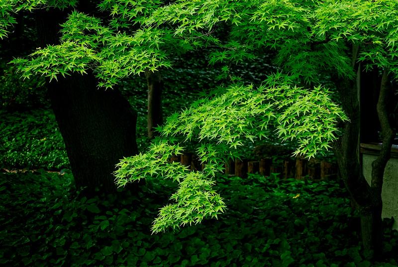 4478 Illuminated-Foliage_v1
