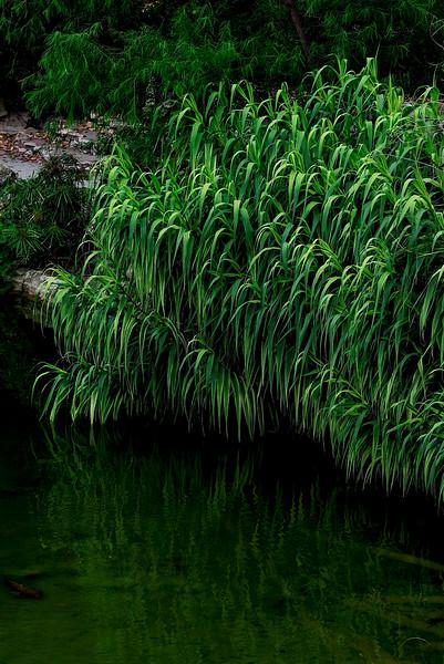 4468 Grasses-At-Pond-Edge-_v1